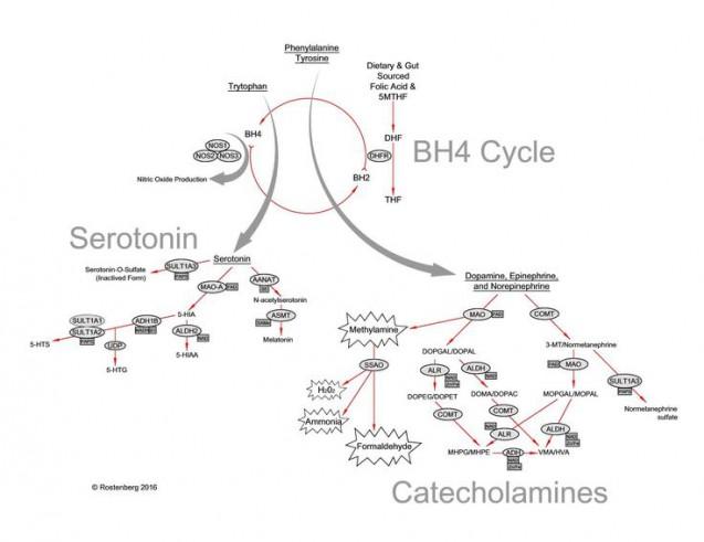 メチレーションにおけるBH4サイクルの図|副腎疲労blog