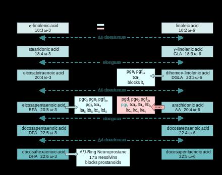 オメガ3とオメガ6の代謝経路|副腎疲労blog
