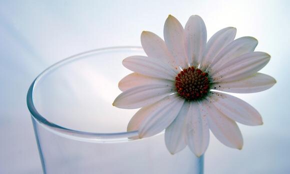コップに一輪の綺麗な白い花|副腎疲労blog