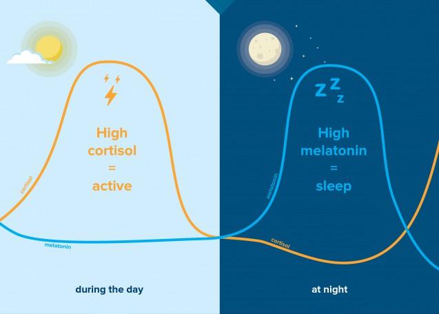 コルチゾールとメラトニンの日内リズム|副腎疲労blog